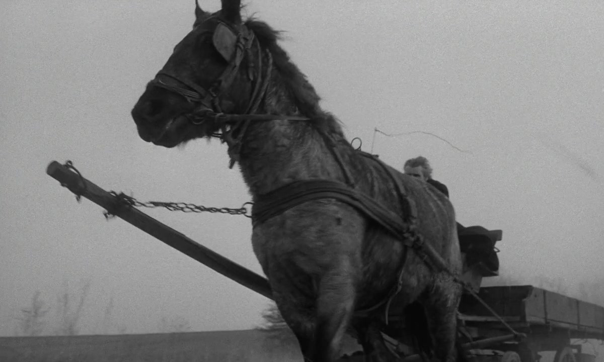 Turin Horse 8